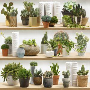 piqués par les cactus