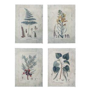 Poster Botanic (4 modèles au choix)