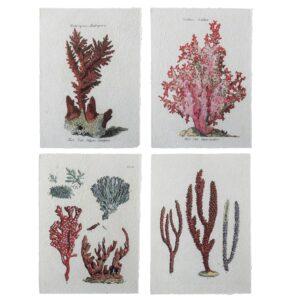 Set de 4 posters algues et coraux