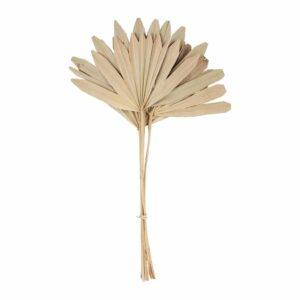 Branchage palmier naturel